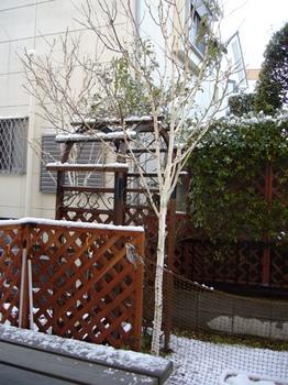 2010.夜は雪そして朝・・ 005.jpgブログ1.jpg
