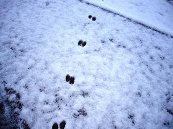 2010.夜は雪そして朝・・ 008.jpgブログ4.jpg