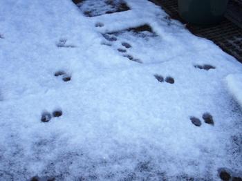 2010.夜は雪そして朝・・ 011.jpgブログ7.jpg