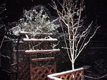 2010.草加公園ドッグラン&夜は雪 016.jpgブログ2.jpg