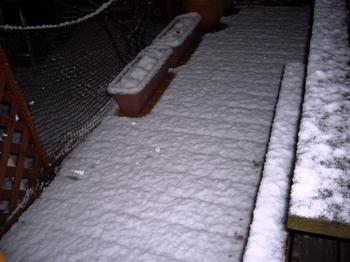 2010.草加公園ドッグラン&夜は雪 018.jpgブログ3.jpg